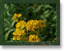 Spring Collection Framed Backgrounds
